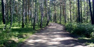 Фотографии и отзывы о коттеджном поселке «Лесной Парк» (Октябрьский р-н Свердловской области)