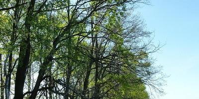 Фотографии и отзывы о коттеджном поселке «Дубки» (Заокский р-н Тульской области)