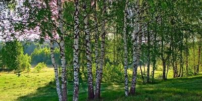 Фотографии и отзывы о коттеджном поселке «Алферово» (Тарусский р-н Калужской области)