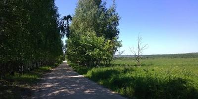 Фотографии и отзывы о коттеджном поселке «Молодилово» (Петушинский р-н Владимирской области)