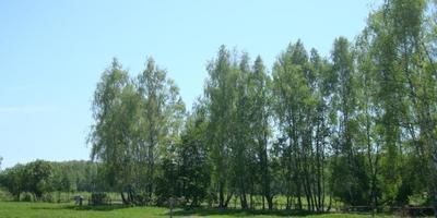 Фотографии и отзывы о коттеджном поселке «Веселево» (Заокский р-н Тульской области)