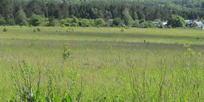 Фотографии и отзывы о коттеджном поселке «Тарусская поляна» (Заокский р-н Тульской области)