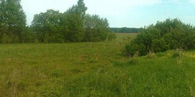 Фотографии и отзывы о коттеджном поселке «Залесово» (Серебряно-Прудский р-н Тульской области)