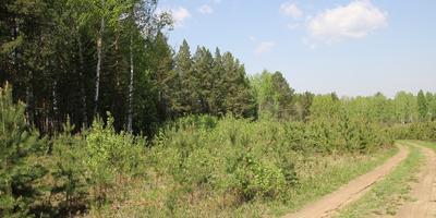 Фотографии и отзывы о коттеджном поселке «Николин ключ» (Сысертский р-н Свердловской области)
