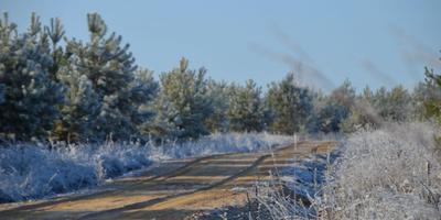 Фотографии и отзывы о коттеджном поселке «Окские леса» (Ясногорский р-н Тульской области)