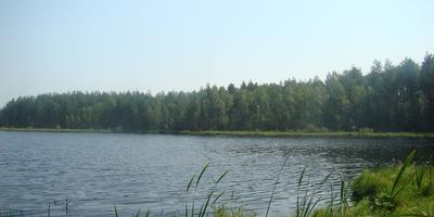 Фотографии и отзывы о коттеджном поселке «Дубки» (Киржачский р-н Владимирской области)