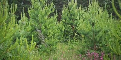 Фотографии и отзывы о коттеджном поселке «Лесные дачи» (Заокский р-н Тульской области)