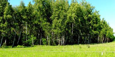 Фотографии и отзывы о коттеджном поселке «Пряники» (Ясногорский р-н Тульской области)
