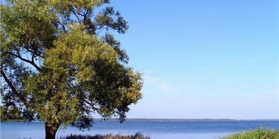 Фотографии и отзывы о коттеджном поселке «Одиссей» (Конаковский р-н Тверской области)