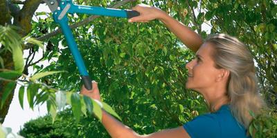 Мы открываем академию обрезки деревьев и кустарников с GARDENA