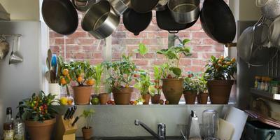12 самых популярных растений для окон кухни с северным, северо-восточным и северо-западным направлением