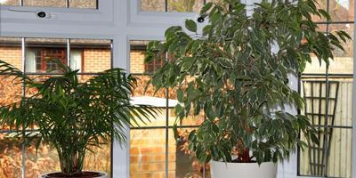 Как правильно выбрать растения для северных окон и других сторон света