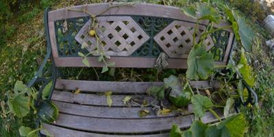 Тыквы присели на скамейку