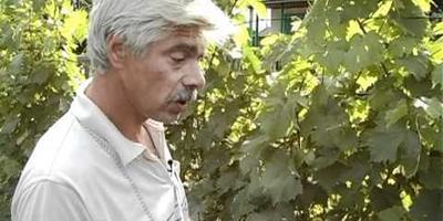 Виноград можно вырастить и в Сибири