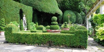Топиари – фигуры, живущие в вашем саду