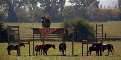 Стол для гигантов или навес для лошадей?
