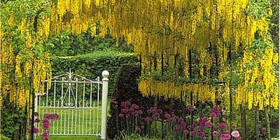 Что такое пергола и зачем она нужна в нашем саду?