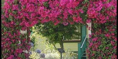 Садовая арка – красота в простоте конструкции