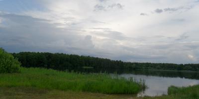 Цветы, озеро, журавли.