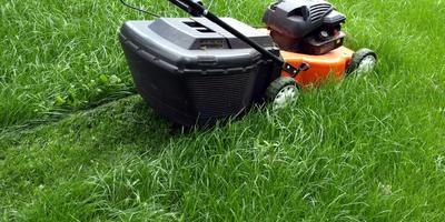 Зелёный газон - на весь дачный сезон