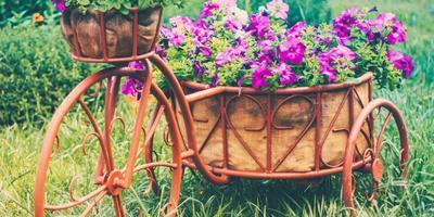 Идеи клумб из велосипеда