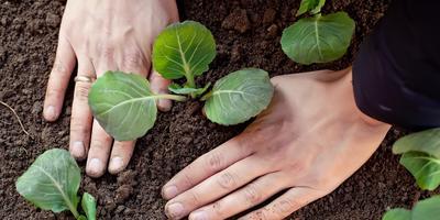 Сезонные работы в саду и огороде: первая неделя июня