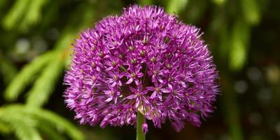 Какие весеннецветущие многолетники посадить в саду?