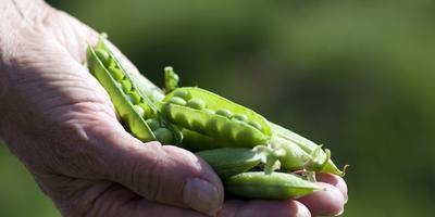 Сезонные работы в саду и огороде: третья неделя июля