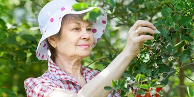 Сезонные работы в саду и огороде: вторая неделя августа