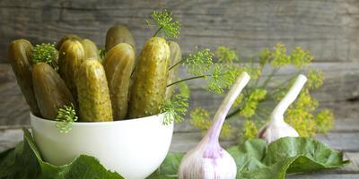 Секреты заготовки соленых и маринованных огурцов