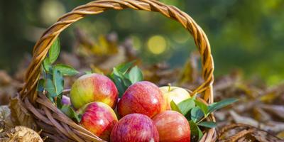Сезонные работы в саду и огороде: третья неделя августа