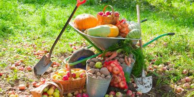 Сезонные работы в саду и огороде: четвертая неделя августа