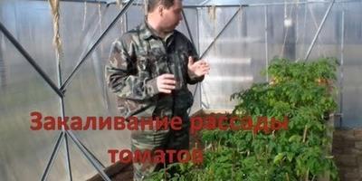 Высадка рассады томатов: 8 полезных видеосюжетов