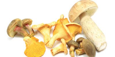 Маринование грибов на зиму