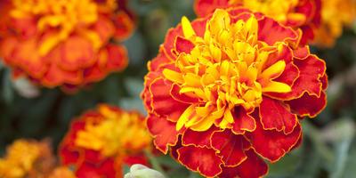 Цветочные аккорды в осенней песне октября