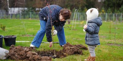 Какие деревья и почему лучше сажать осенью