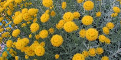 Понравились цветы, кто знает их название?