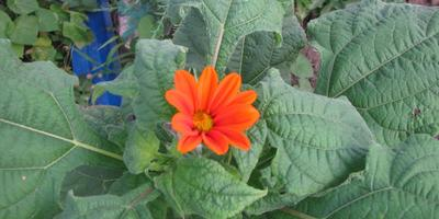 Помогите опознать цветок!