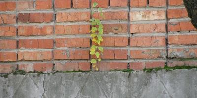 Растения - удивительная тяга к жизни!