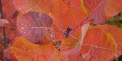 Осенние листья – вот это цвет!