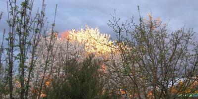 Весенний закат солнца