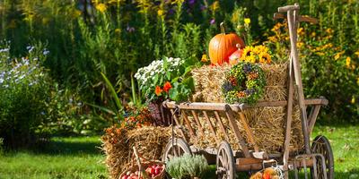 Лунный посевной календарь на сентябрь 2016 года