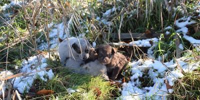 Как найти хозяев щенкам?