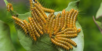 Инсектициды: выбираем правильно