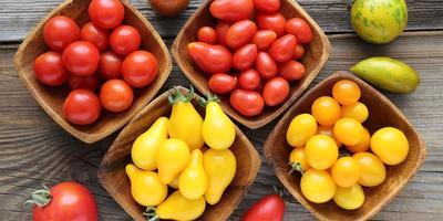 Необычные сорта томатов — перцевидные, грушевидные, черри