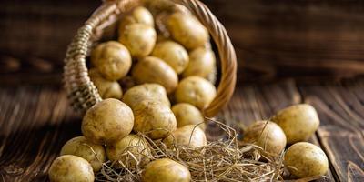 Грибные и бактериальные гнили картофеля