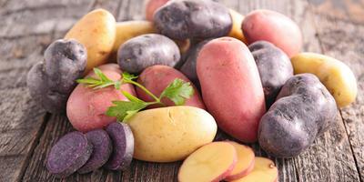 Как определять сроки обработки картофельных делянок от фитофторы