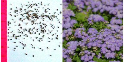 Особенности посева мелких семян