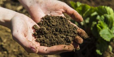 Ценность органических удобрений