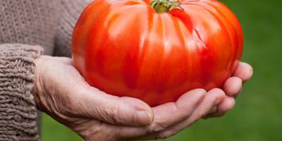 Регуляторы роста растений - за и против